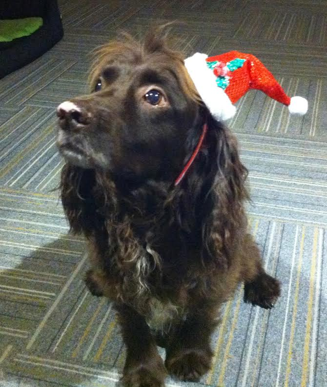 treacle the dog at Christmas