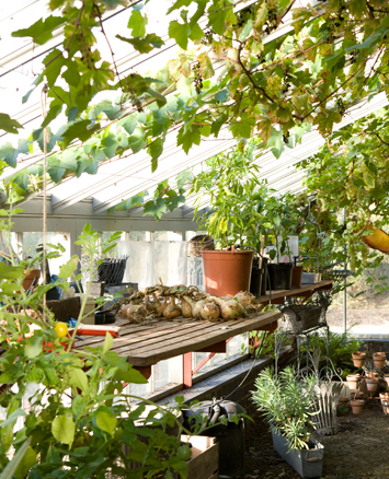 Greenhouse interior with plants and vegetables
