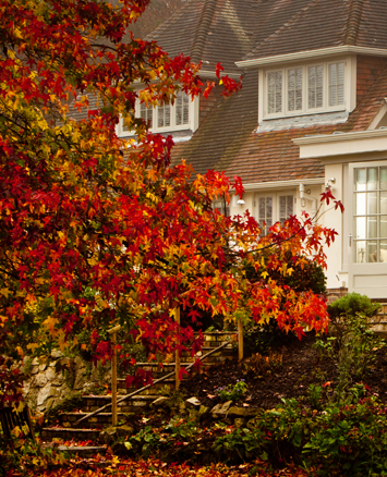 Autumn leaves outside a large glazed extension, making a lovely view