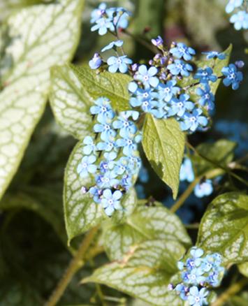 Flowers in bloom in garden outside a garden room