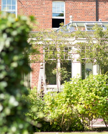 View of garden room with roof lantern through grapevines