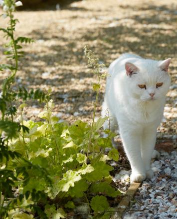 Cat in a garden outside a garden room