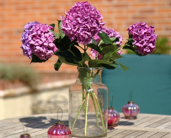 Close up of purple flower on garden table