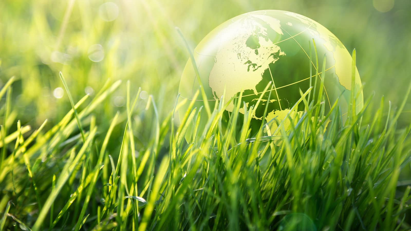 Green grass and globe