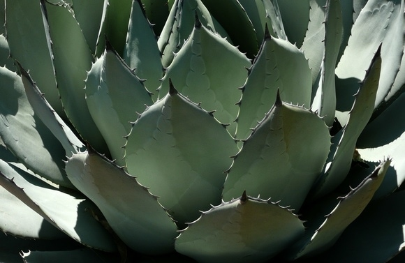 Cacti make both a fashionable and drought-friendly addition to your garden