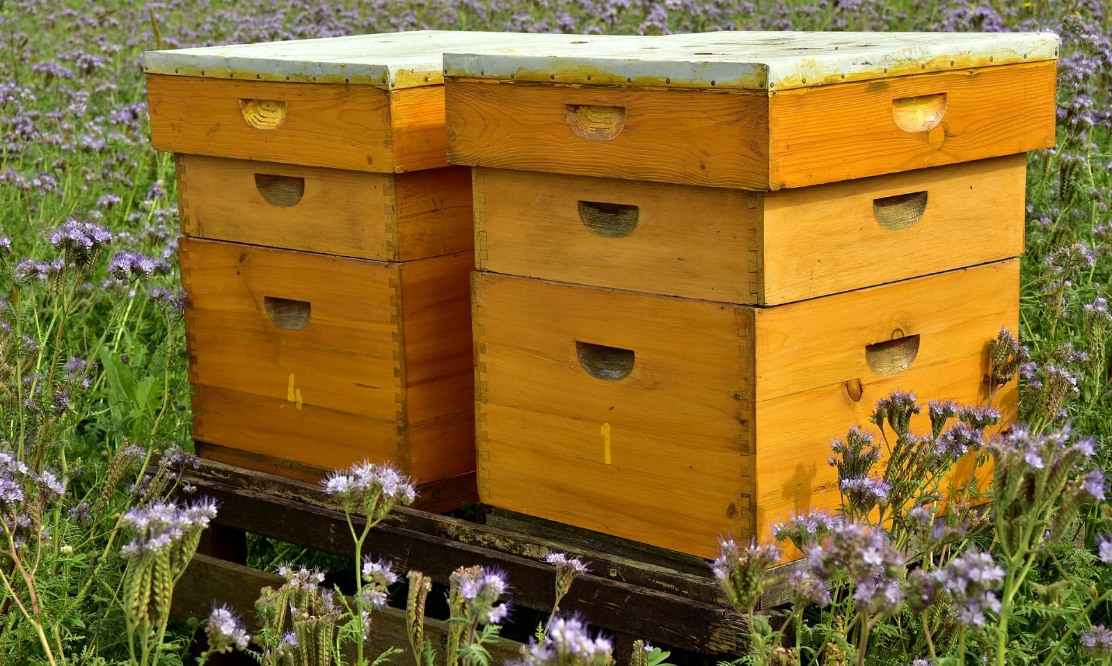 Save the bees – it's time to take action