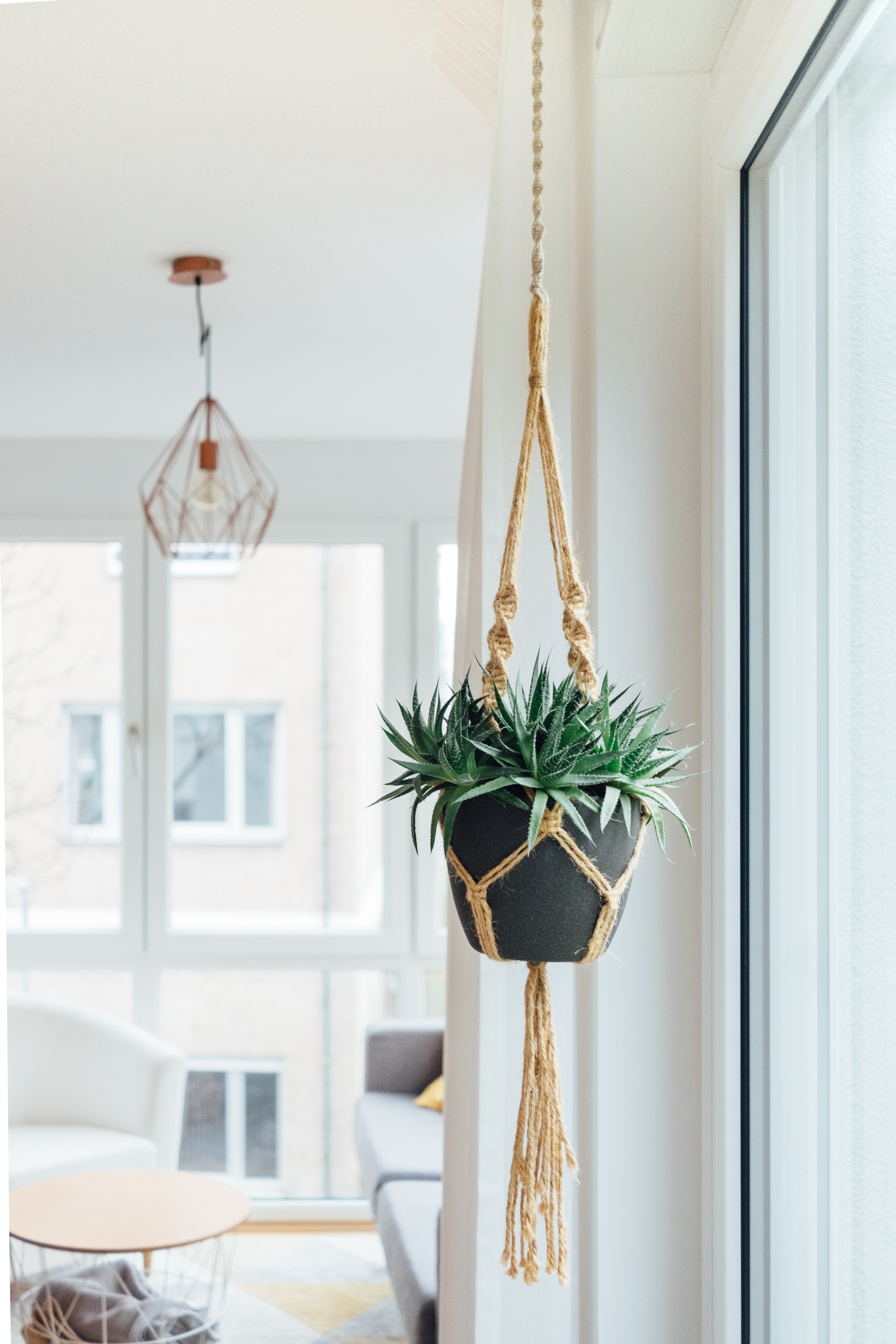 Best summer houseplants - hanging baskets