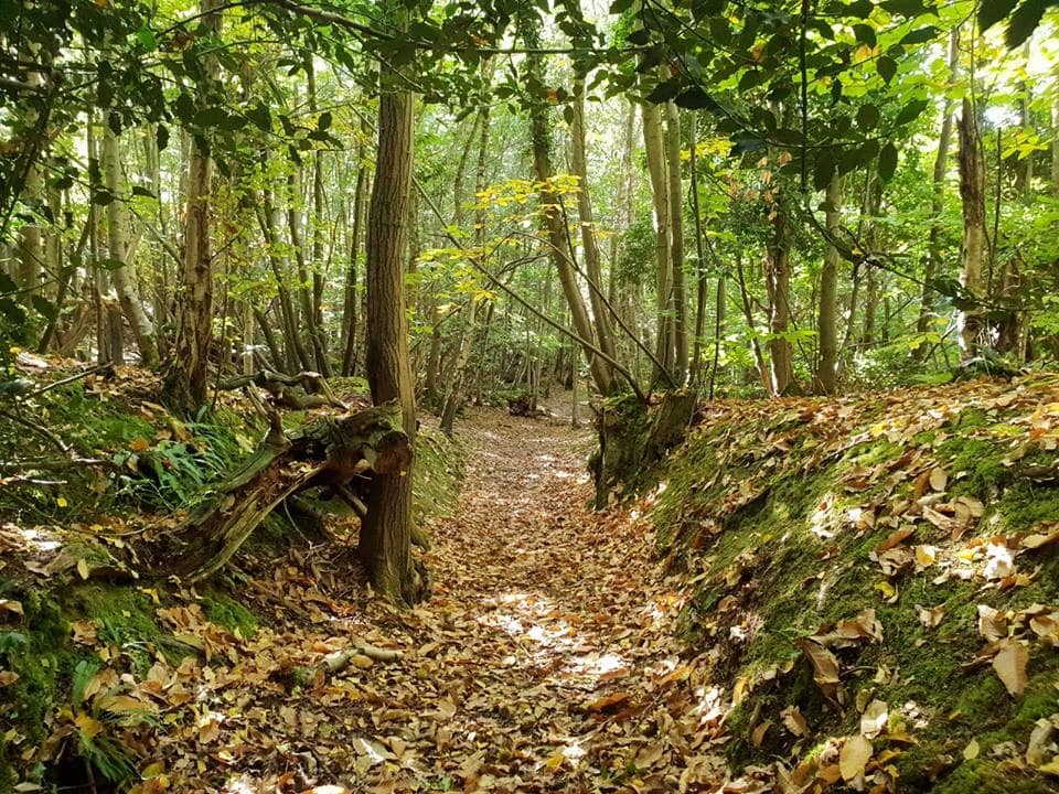 Autumnal country walks - Guestling Woods