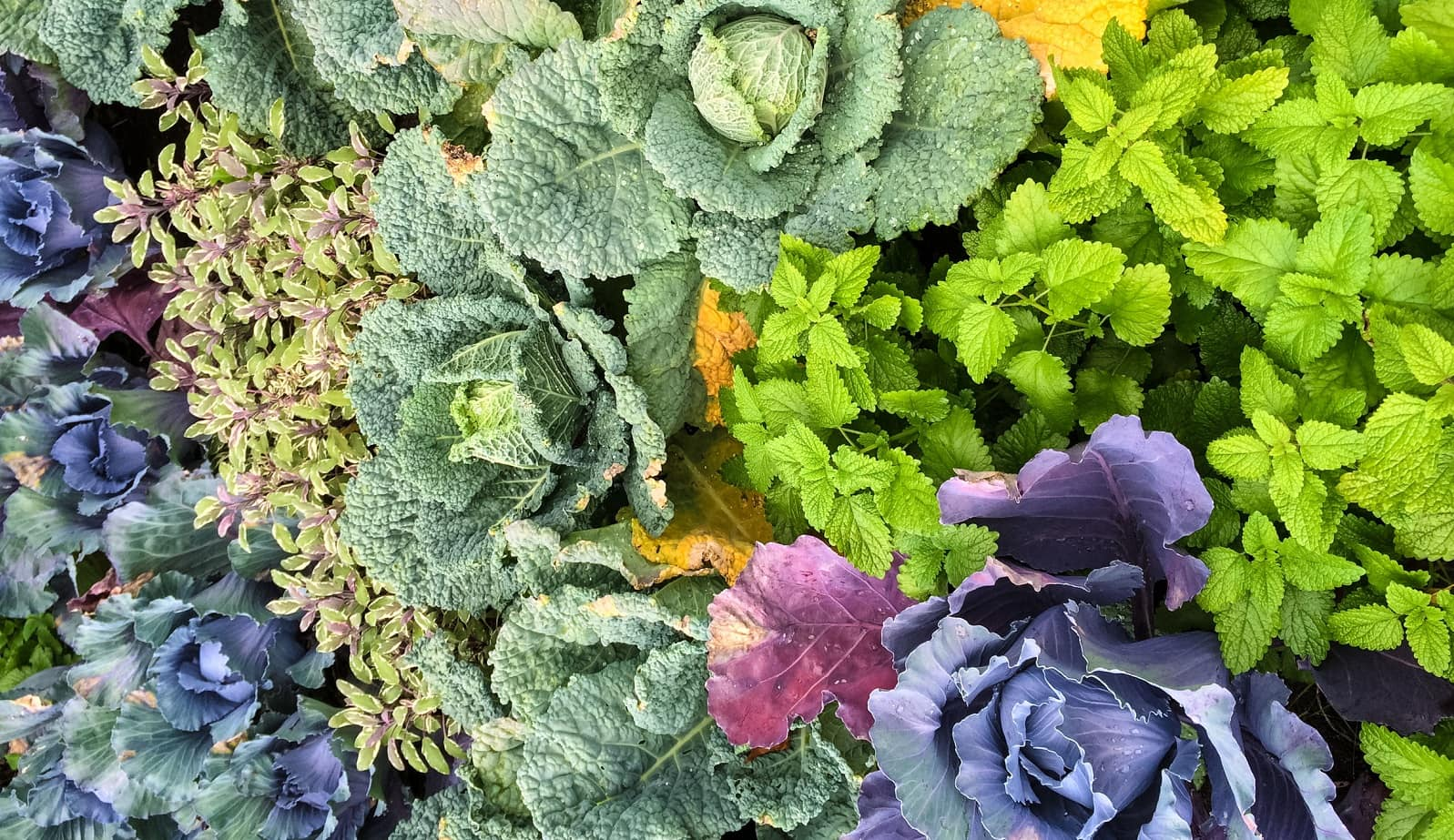 2019 Planting guide: How to build a vegetable garden