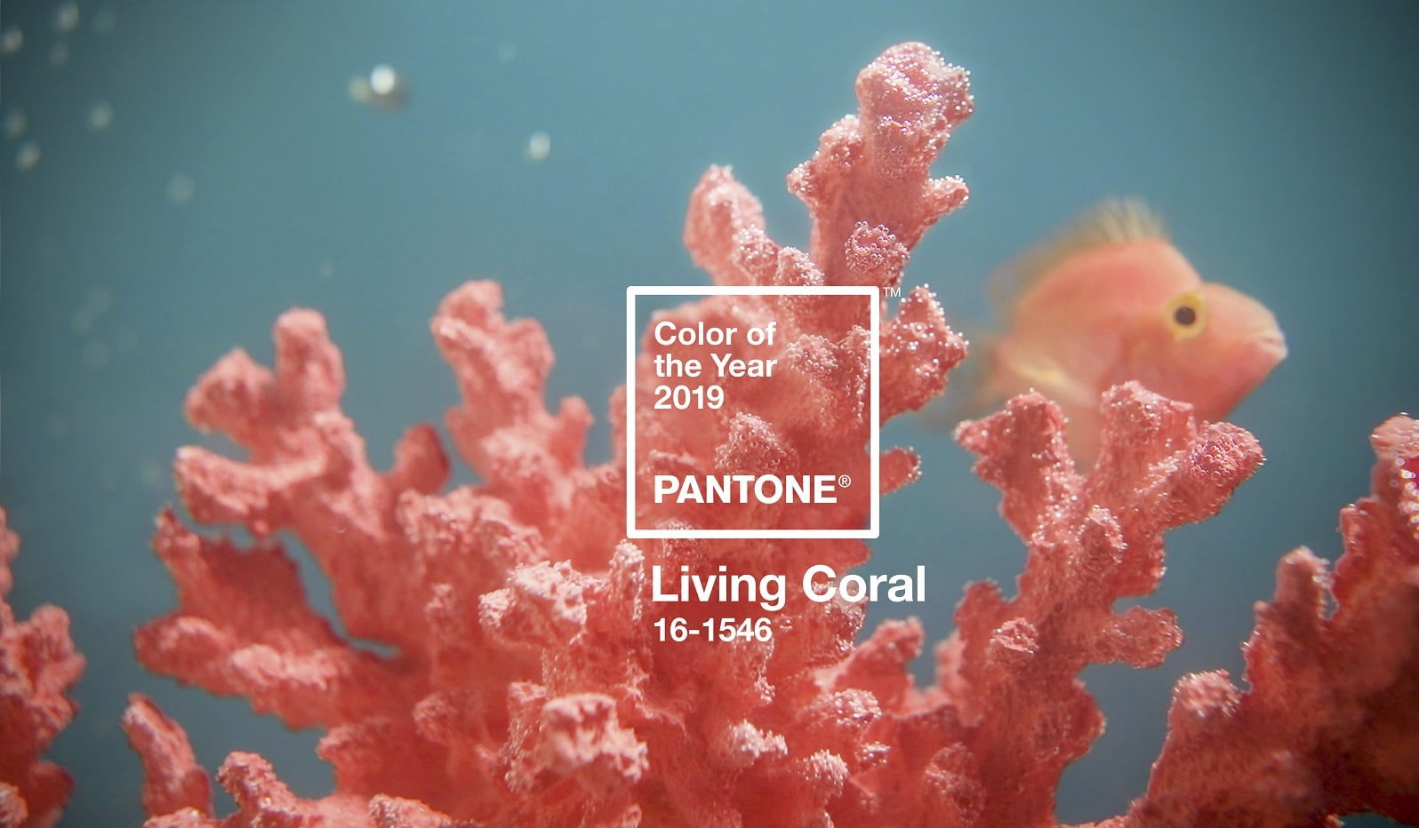 2019 Pantone Colour Of The Year: Living Coral