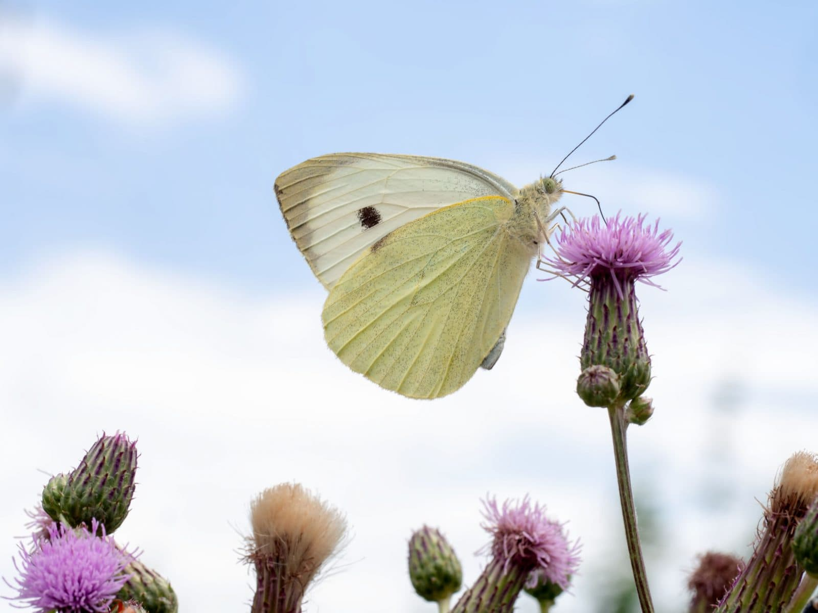 Take part in the Big Butterfly Count 2019