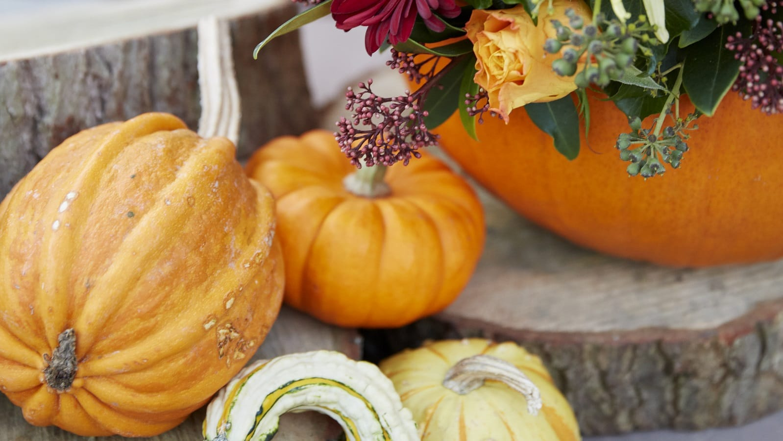 Gardening spotlight: pumpkins and gourds